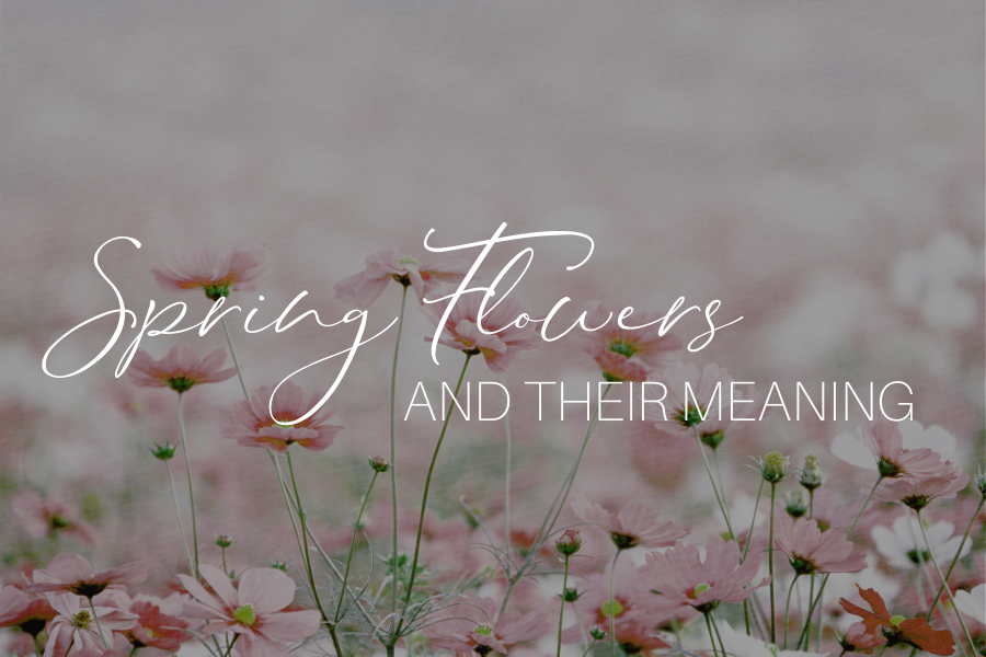 Spring Flowers And Their Meaning